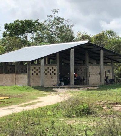 Gobierno de Cozumel venderá caballos de la extinta Policía Montada
