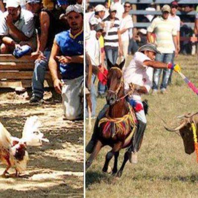 Mantiene Partido Verde postura en favor de prohibiciones de corridas de toros y peleas de gallos en Quintana Roo y advierte que no cambiará de opinión