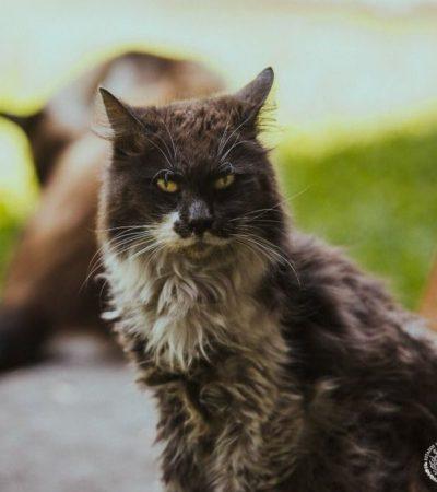 Muere 'Gruñón', gatito habitante de Palacio Nacional