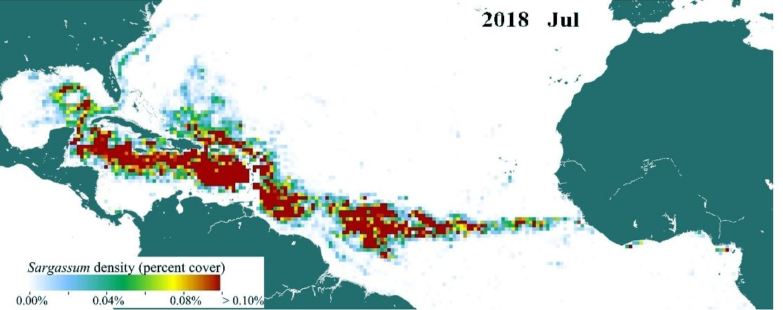HALLAN LA MANCHA MÁS GRANDE DE SARGAZO: Un 'cinturón' del alga de 20 millones de toneladas atraviesa el Atlántico desde Africa hasta el Golfo de México