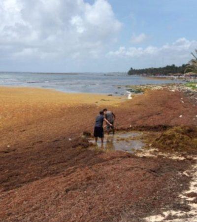 Prestadores de servicios turísticos de la zona sur sufren por baja ocupación debido a cancelaciones por presencia de sargazo