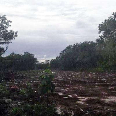 Sofocan incendio en Puerto Morelos al parecer iniciado por inmobiliaria