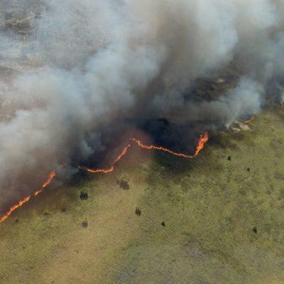 Rompeolas: Cóctel de incendios forestales en zonas protegidas y sargazo en Quintana Roo