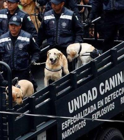 Pide Unidad Canina de la Policía Federal ser integrada a la GN; agentes y 60 canes dispuestos