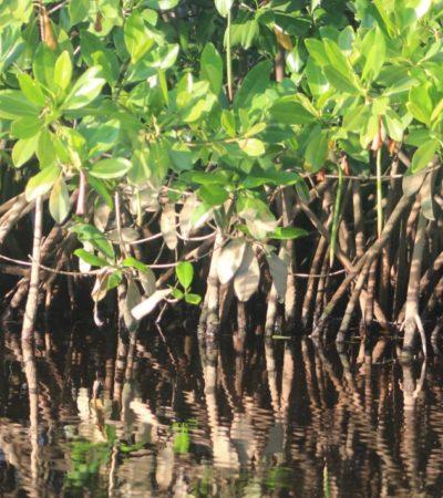 Multan con 5 mdp a municipio yucateco por derribo de manglares en la 'Reserva Estatal Dzilam de Bravo'