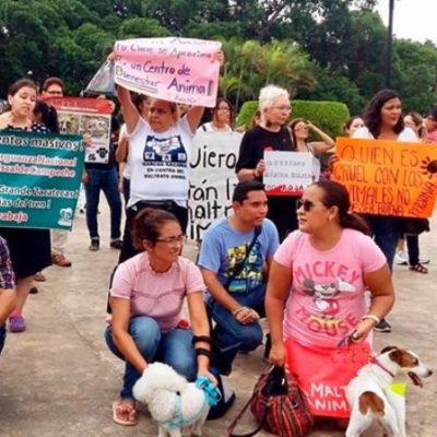 Marchan en Mérida contra el maltrato animal; exigen fin a torneos de lazo y 'motuleadas'