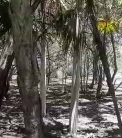 Denuncian tala de manglar en zona costera de Tulum