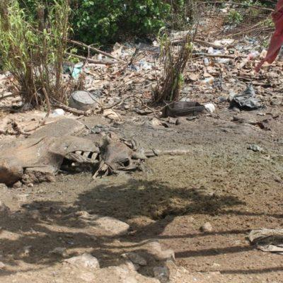 Denuncian foco de infección provocado por desechos a lado de una laguna en Lázaro Cárdenas