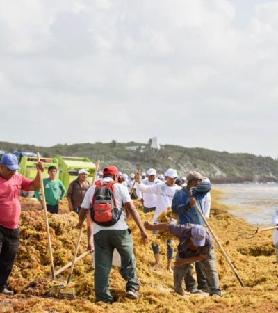Redoblarán esfuerzos para combatir el recale atípico de sargazo en Tulum con la contratación de más personal y vehículos
