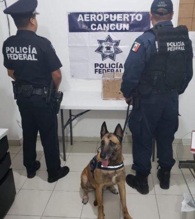 Decomisa la Policía Federal una caja con droga en empresa de mensajería en Cancún