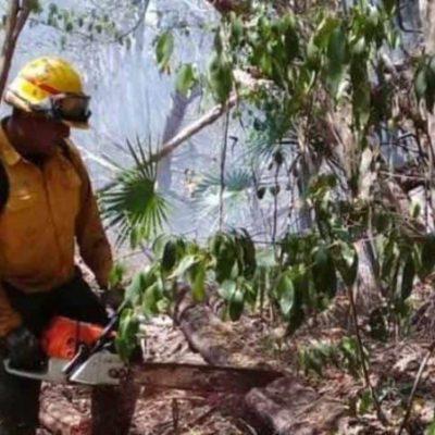 Autoridades atienden tres incendios forestales en Quintana Roo, informa SEMA