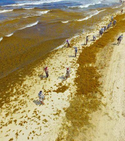 INVADE SARGAZO PLAYA DELFINES: Reconoce Mara Lezama recale sin precedentes en uno de los balnearios más visitados de Cancún
