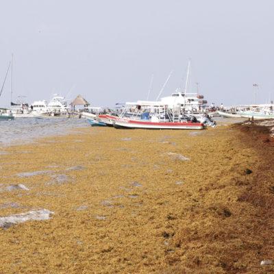 EL SARGAZO VA GANANDO LA BATALLA: Reconoce Semar que la falta de estudios provoca una situación de debilidad ante el recale masivo del alga