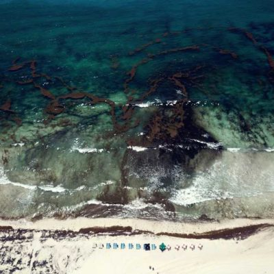 Presencia de sargazo en playa Delfines disminuye considerablemente la visita de bañistas