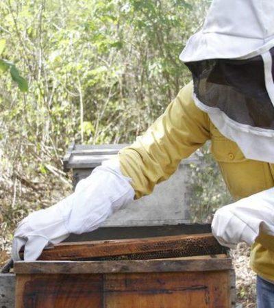 Gobierno de Puerto Morelos plantea esquema para fortalecer el desarrollo del sector apícola del municipio
