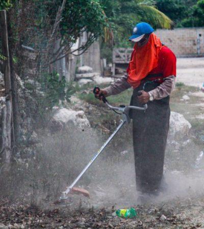 Realizan intensa jornada de recolección de basura en la Zona Continental de Isla Mujeres
