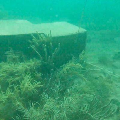 Estructuras antisargazo de Dakatso dañan arrecife de coral en Puerto Morelos