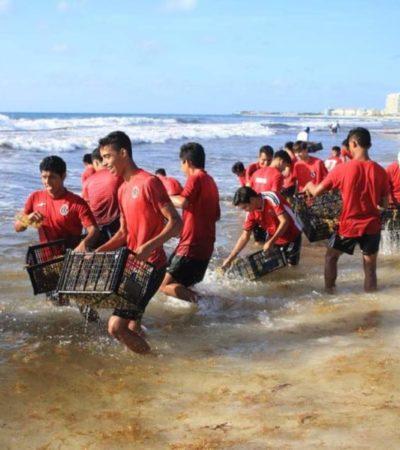 """Campaña """"Todos contra el sargazo"""" mantiene alta participación de voluntarios en la limpieza de playas de Cancún"""