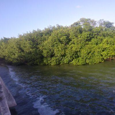 Presentan proyecto de limpieza de la laguna Nichupté con recursos del impuesto al Derecho de Saneamiento Ambiental