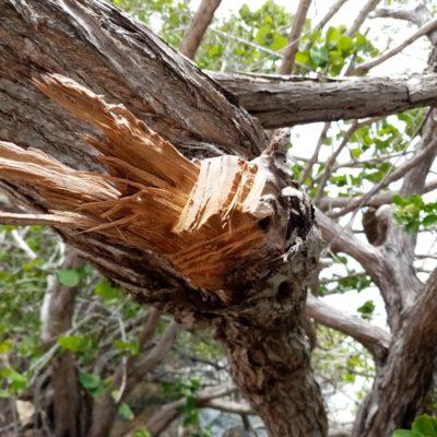 INSPECCIÓN EN BOULEVARD BAHÍA: Determinan que plantas cortadas en torno a la megaescultura no eran mangle