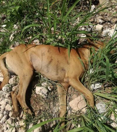 FOTOS Y VIDEOS | Denuncian envenenamiento masivo de canes y fauna silvestre en el norte de Mérida