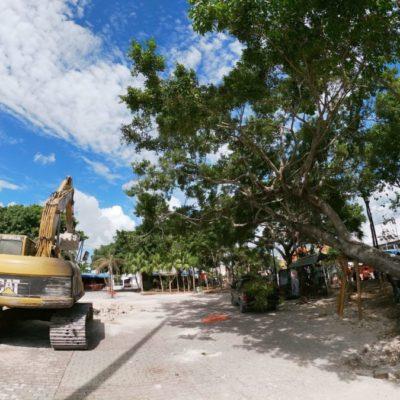 """Plan de reforestación en la zona de """"El Crucero"""" es el mayor logro que se ha tenido, afirma arborista"""