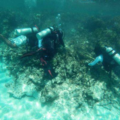 REALIZAN SIEMBRA MASIVA DE CORALES: Lanzan ambicioso programa para regenerar barrera de arrecifes en el Caribe mexicano