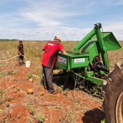 Costos de producción de chihua disminuyen hasta un 30% debido al uso de maquinaria en José María Morelos