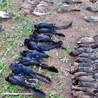 Tiran tortillas con veneno en parque de Zapopan; mueren 65 aves de diversas especies