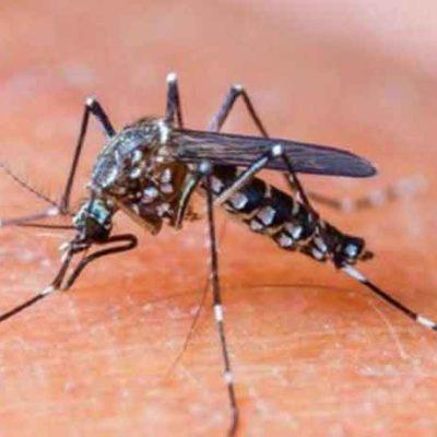 Confirman que casos de dengue en QR continúan en aumento