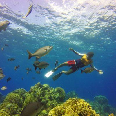 Anuncia Conanp cierre de zona arrecifal por 'Síndrome Blanco' en la parte sur de Cozumel, a pesar de oposición de turisteros