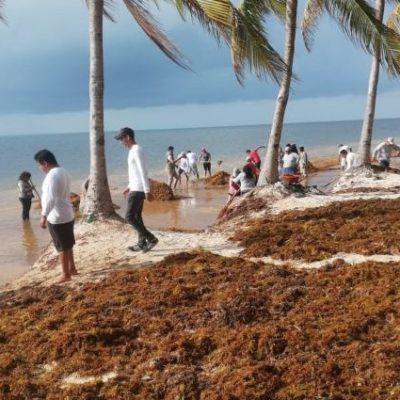 Presencia de sargazo en playas quintanarroenses impactó llegada de turismo italiano