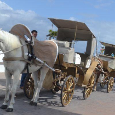Caleseros incumplen con ley de bienestar animal en Cozumel, denuncian