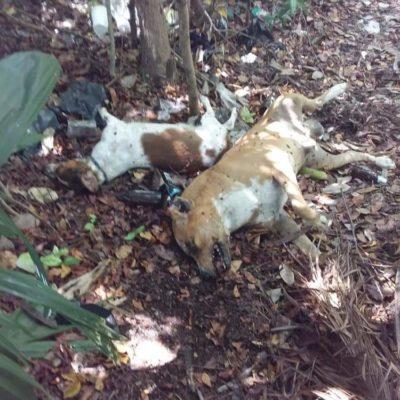 Envenenamiento de perros, por impunidad, acusa activista