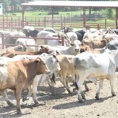 Embargan propiedades a ganaderos de Tabasco por reclamo de 30 mdp que les 'perdonó' anterior gobierno