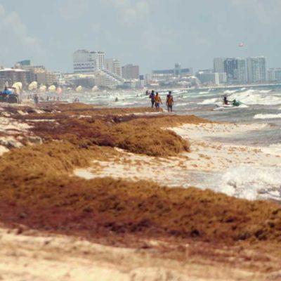 AVANZA PLAN PARA ASEGURAR PLAYAS CONTRA EL SARGAZO: El modelo busca determinar impacto económico del recale del alga y la afectación al ambiente costero