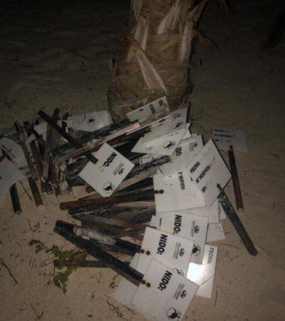 Exhiben afectación de 20 nidos de tortuga marina por festejo de boda en la playa del hotel Palladium