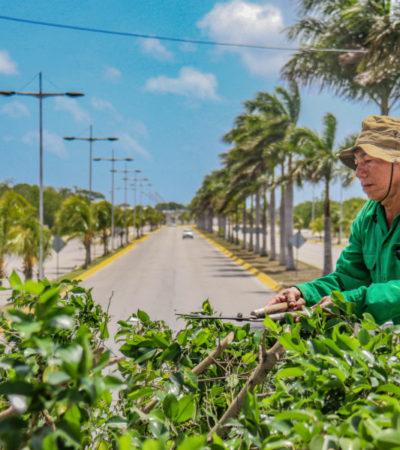 Dan prioridad a la atención y mantenimiento de parques y jardines en Cozumel