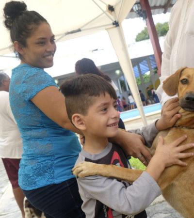Invitan a dueños de mascotas a aprovechar el último día de la Campaña de Esterilización Gratuita en Isla Mujeres