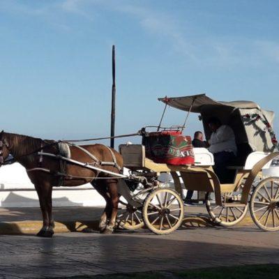 A partir del miércoles caleseros tendrán que mostrar certificación de salud de caballos en Cozumel