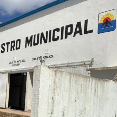 Aseguran autoridades que se respeta la norma para matar cerdos en rastro de Cozumel
