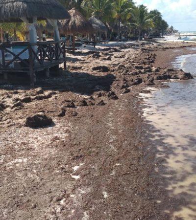 Playas de Holbox lucen llenas de sargazo por paso de 'norte'