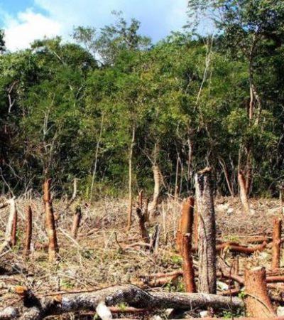 Acusan ejidatarios yucatecos que megaproyectos privados provocarían deforestación selvática