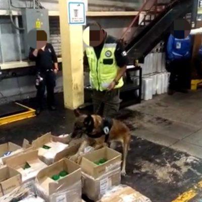 Aseguran en el AICM 256 kilos de cocaína procedente de Bogotá y 'disfrazada' de polvo limpiador