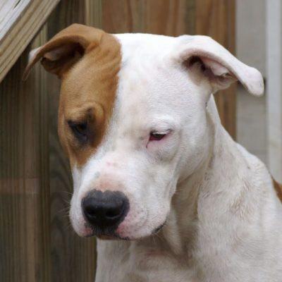 Muerde pitbull a niña en Ucú; familiares la reportan estable y piden conservar al perro