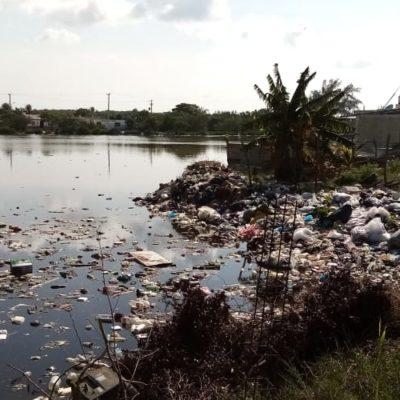 AVERGÜENZA BASURA EN CELESTÚN: Denuncian tiradero de desechos en el puerto de abrigo del icónico destino que forma parte de un Área Natural Protegida de Yucatán