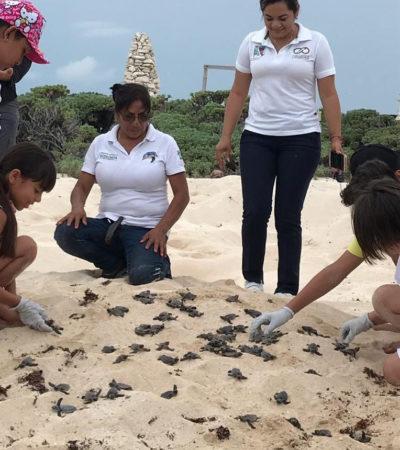 Participaron dependencias en el cuidado de 2 mil 606 nidos de tortugas marinas este año en Puerto Morelos