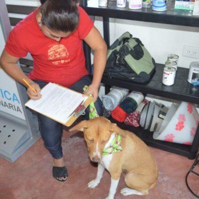Anuncian programa permanente de esterilización gratuita para mascotas en Isla Mujeres