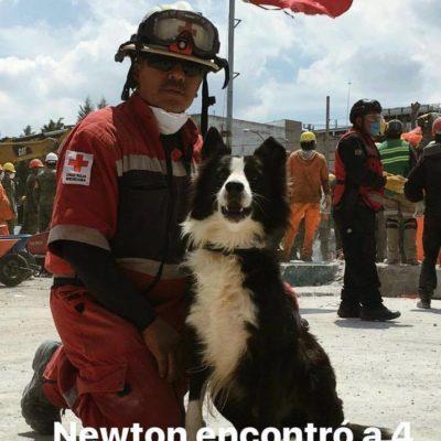 Piden ayuda para encontrar a 'Newton', un can rescatista del Cuerpo de Bomberos; se extravió en el Periférico de Mérida