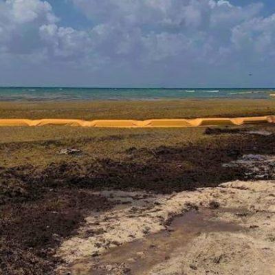 Invertirá Zofemat 66 mdp para el combate de sargazo en playas de Solidaridad
